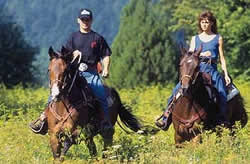 Horse riding in the Czech Republic